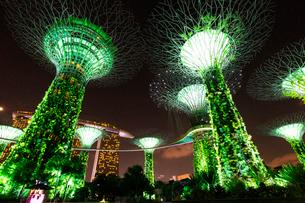 シンガポールのスーパーツリーの写真素材 [FYI02996948]