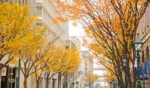 神戸 元町 旧居留地の秋の写真素材 [FYI02997070]