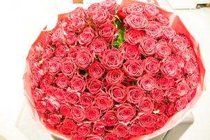 100本のバラ 100本薔薇の写真素材 [FYI02997126]