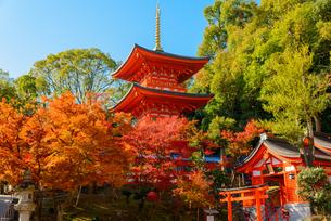 須磨寺と紅葉の写真素材 [FYI02997208]