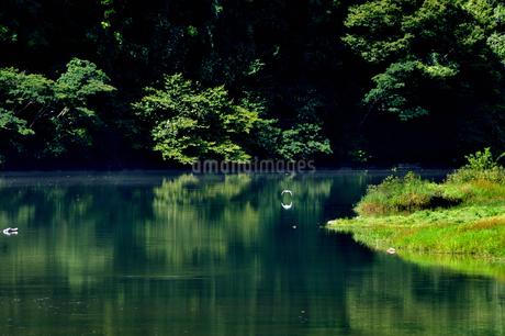 笠置峡の写真素材 [FYI02997227]