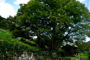 折坂棚田の写真素材 [FYI02997238]