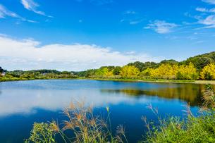 秋の大溜 農業用水の写真素材 [FYI02997453]