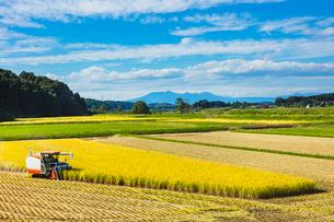 コンバインの稲刈りの写真素材 [FYI02997459]