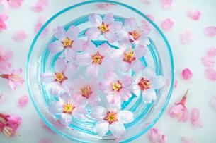 ガラス器と桜の花の写真素材 [FYI02997495]