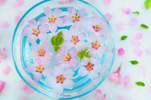 ガラス器と桜の花の写真素材 [FYI02997496]