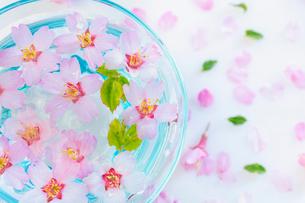ガラス器と桜の花の写真素材 [FYI02997498]