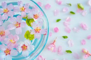 ガラス器と桜の花の写真素材 [FYI02997499]