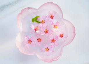 ガラス器と桜の花の写真素材 [FYI02997500]