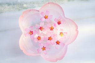 ガラス器と桜の花の写真素材 [FYI02997502]