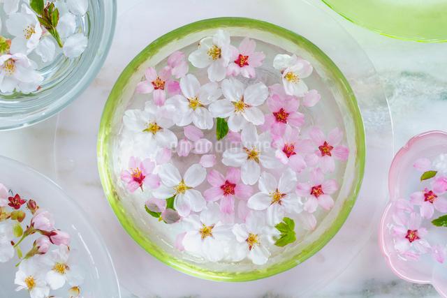 ガラス器と桜の花の写真素材 [FYI02997503]