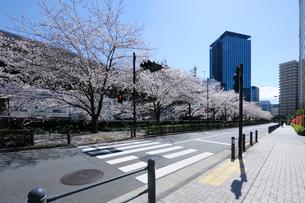 飯田橋ガーデンエアタワー前の桜並木と歩道の写真素材 [FYI02997561]