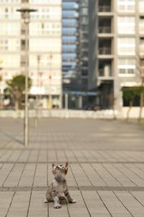 見上げる子猫の写真素材 [FYI02997572]