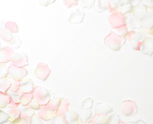 花びらの写真素材 [FYI02997689]