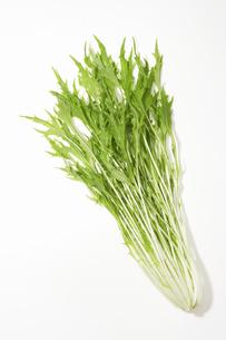 水菜の写真素材 [FYI02997699]
