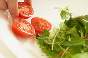 皿にサラダ用の野菜を盛る人の手元の写真素材 [FYI02997815]