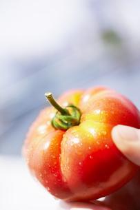赤いトマトを持つ手の写真素材 [FYI02997887]