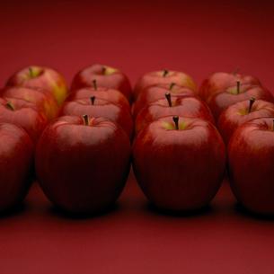 四角形に並べたリンゴの写真素材 [FYI02997981]