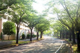 郊外の朝の並木道の写真素材 [FYI02998798]