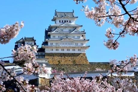 満開の桜,桜門橋から姫路城大天守閣の写真素材 [FYI02998858]