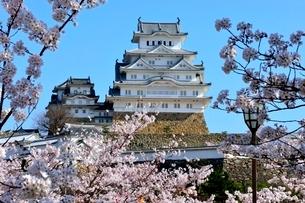 満開の桜,桜門橋から姫路城大天守閣の写真素材 [FYI02998860]