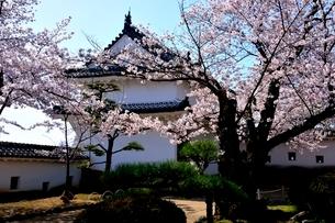 満開の桜,西の丸庭園百間廊下入口の写真素材 [FYI02998865]
