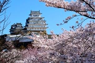 満開の桜,姫路城大天守閣の写真素材 [FYI02998872]