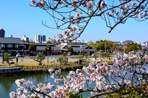 満開の桜,姫路城外濠から街並みの写真素材 [FYI02998891]