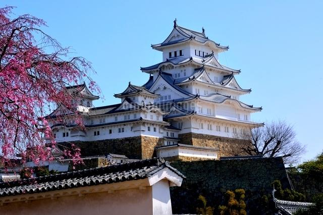 満開の桜,西の丸庭園から姫路城大天守閣の写真素材 [FYI02998909]