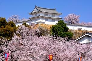 満開の桜,西の丸庭園カの槽の写真素材 [FYI02998916]