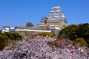 満開の桜,姫路城大天守閣の写真素材 [FYI02998923]
