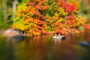紅葉に囲まれたセントラルパークのザ レイクでボートに乗るカップル。の写真素材 [FYI02998990]