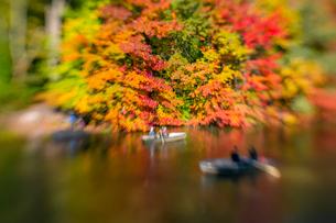 紅葉に囲まれたセントラルパークのザ レイクでボートに乗るカップル。の写真素材 [FYI02998997]