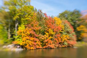 紅葉に囲まれたセントラルパークのザ レイク。の写真素材 [FYI02999003]