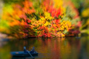 紅葉に囲まれたセントラルパークのザ レイクでボートに乗るカップル。の写真素材 [FYI02999005]