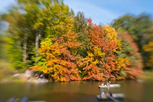 紅葉に囲まれたセントラルパークのザ レイクでボートに乗るカップル。の写真素材 [FYI02999007]