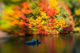 紅葉に囲まれたセントラルパークのザ レイクでボートに乗るカップル。の写真素材 [FYI02999009]
