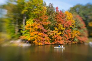 紅葉に囲まれたセントラルパークのザ レイクでボートに乗るカップル。の写真素材 [FYI02999013]