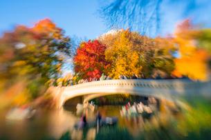 紅葉に囲まれたセントラルパークのザ レイクに掛かるボウブリッジを渡る人々とボートに乗る人々。の写真素材 [FYI02999014]