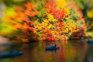 紅葉に囲まれたセントラルパークのザ レイクでボートに乗るカップル。の写真素材 [FYI02999018]