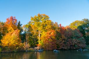 夕日に輝く紅葉に囲まれたセントラルパークのザ レイクでボートに乗るカップル。の写真素材 [FYI02999020]