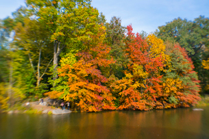 紅葉に囲まれたセントラルパークのザ レイク。の写真素材 [FYI02999021]
