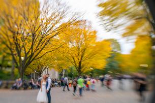 紅葉の並木に囲まれるセントラルパークのザ モールでウエディング写真を撮るカップルと人々。の写真素材 [FYI02999022]