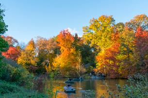 夕日に輝く紅葉に囲まれたセントラルパークのザ レイクでボートに乗るカップル。の写真素材 [FYI02999026]