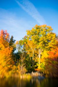 夕日に輝く紅葉に囲まれたセントラルパークのザ レイク。の写真素材 [FYI02999033]