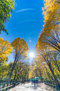 紅葉の並木に囲まれるセントラルパークのザ モールを照らす太陽と人々。の写真素材 [FYI02999034]