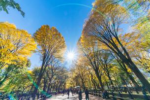 紅葉の並木に囲まれるセントラルパークのザ モールを照らす太陽と人々。の写真素材 [FYI02999035]