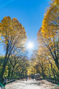 紅葉の並木に囲まれるセントラルパークのザ モールを照らす太陽と人々。の写真素材 [FYI02999036]