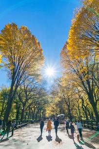 紅葉の並木に囲まれるセントラルパークのザ モールを照らす太陽と人々。の写真素材 [FYI02999037]