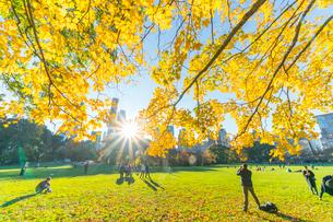 ミッドタウンマンハッタン摩天楼の間に輝く太陽に照らされるセントラルパーク シープメドウの紅葉と落ち葉の写真素材 [FYI02999038]